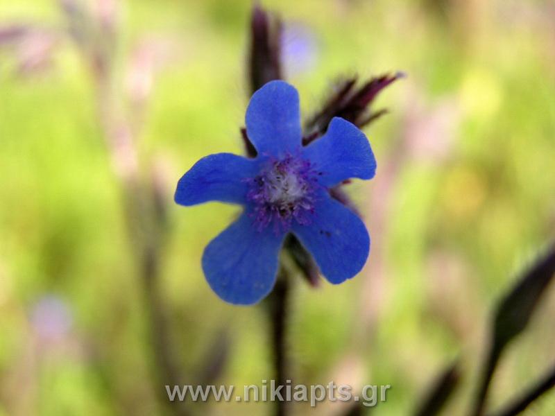 flowers_new